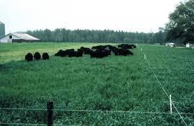 Hạt cỏ Yến Mạch cho mùa Đông