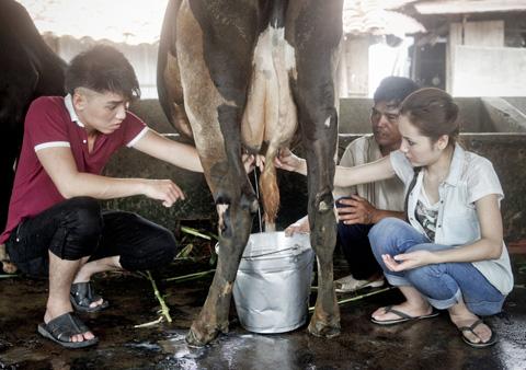 vắt vuốt sữa bò bằng tay